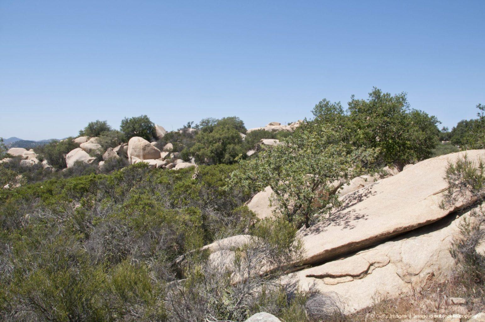 coastal sage scrub habitat in southern california
